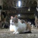 『チャルカ』予告編完成!